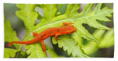 Red Eft Eastern Newt Beach Sheet by Christina Rollo