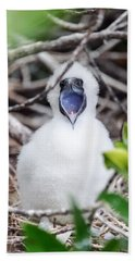 Red Footed Booby Chick Beach Towel by Jess Kraft