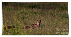 Beach Towel featuring the photograph Red Fox Family by Brad Allen Fine Art