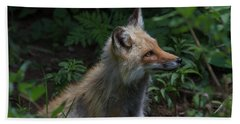 Red Fox In The Forest Beach Towel