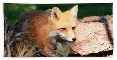 Red Fox On Patrol Beach Towel