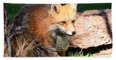 Red Fox On Patrol Beach Towel by Debby Pueschel
