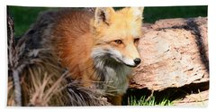 Red Fox On Patrol Beach Sheet by Debby Pueschel