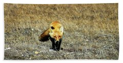 Beach Towel featuring the photograph Red Fox On The Tundra by Anthony Jones