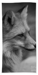Red Fox Portrait In Black And White Beach Towel