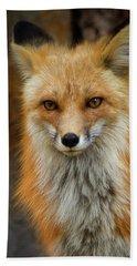 Red Fox Portrait Beach Sheet