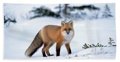 Beach Towel featuring the photograph Red Fox Vulpes Vulpes Portrait by Konrad Wothe