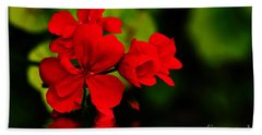 Red Geranium On Water Beach Sheet