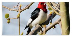 Red-headed Woodpecker At A Glace  Beach Towel by Ricky L Jones