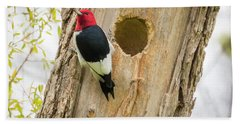 Red-headed Woodpecker At Home Beach Towel by Ricky L Jones