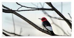 Red-headed Woodpecker Beach Towel