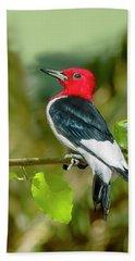 Red-headed Woodpecker Portrait Beach Towel