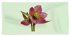 Red Hellebore Green Background Beach Sheet