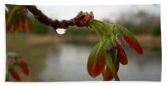 Red Maple Seed Pods At Dawn Beach Towel by Kent Lorentzen
