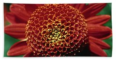 Beach Towel featuring the photograph Red Mum Center by Sally Weigand