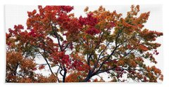 Beach Towel featuring the photograph Red Orange Treetop by Ellen O'Reilly