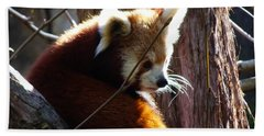 Beach Towel featuring the photograph Red Panda by Angela DeFrias