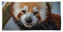 Red Panda Portrait Beach Sheet