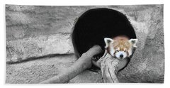 Red Panda Sleeping Beach Towel