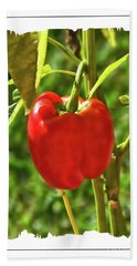Red Pepper On The Vine Beach Sheet