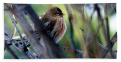 Red Poll, Resting Beach Towel