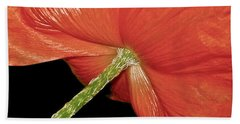 Red Poppy Flower On Black Background Beach Sheet by Carol F Austin