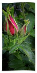 Red Rugosia Bud Beach Sheet