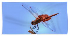 Red Saddlebag Dragonfly Beach Towel