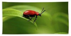 Red Scarlet Lily Beetle On Plant Beach Towel by Sergey Taran