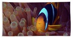 Red Sea Clownfish, Eilat, Israel 9 Beach Towel