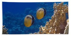 Red Sea Exquisite Butterflyfish  Beach Sheet
