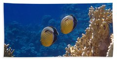 Red Sea Exquisite Butterflyfish  Beach Towel