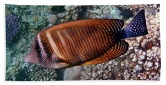 Red Sea Sailfin Tang 3 Beach Sheet