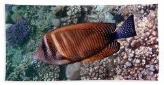 Red Sea Sailfin Tang 3 Beach Towel