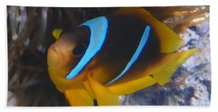 Red Sea Twoband Anemonefish 2 Beach Towel