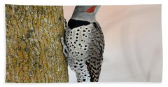 Red Shafted Northern Flicker Beach Towel