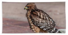 Red-shouldered Hawk Beach Sheet by Martina Thompson