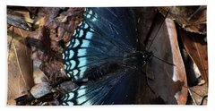 Beach Towel featuring the photograph Red Spotted Purple Admiral by Skip Willits