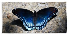 Red-spotted Purple Butterfly Beach Sheet by Kerri Farley