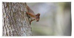 Red Squirrel Climbing Down A Tree Beach Sheet