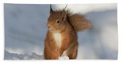 Red Squirrel In The Snow Beach Sheet