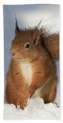 Beach Towel featuring the photograph Red Squirrel In The Snow by Karen Van Der Zijden