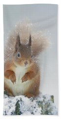 Red Squirrel In Winter Beach Towel