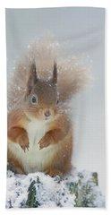 Red Squirrel In Winter Beach Sheet