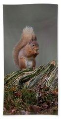 Red Squirrel Nibbling A Nut Beach Sheet