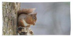 Red Squirrel On Tree Fungus Beach Sheet