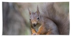 Red Squirrel - Scottish Highlands #26 Beach Sheet