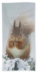 Red Squirrel With Snowflakes Beach Towel