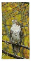 Red Tail Hawk 9888 Beach Sheet by Michael Peychich