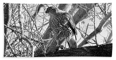 Red Tail Hawk In Black And White Beach Towel